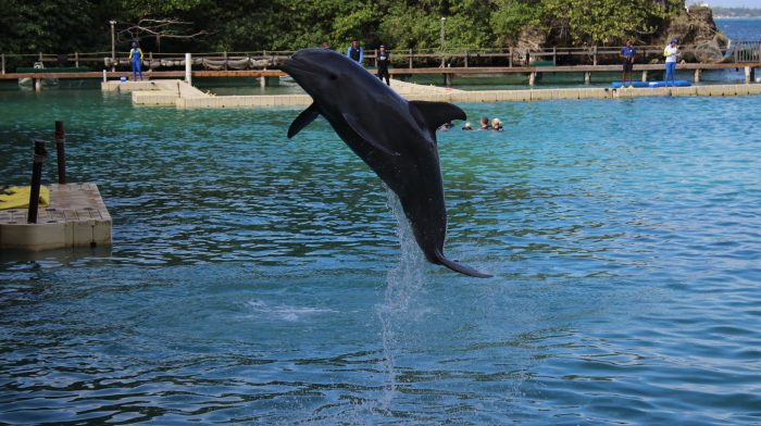 Met dolfijnen zwemmen in Dolphin Cove