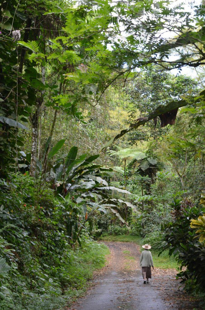 Les Ombrages - Martinique
