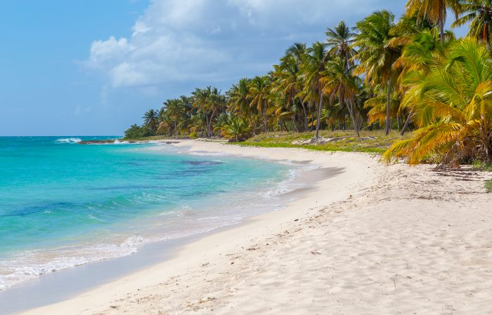 Palmbomen bij het strand van Isla Saona