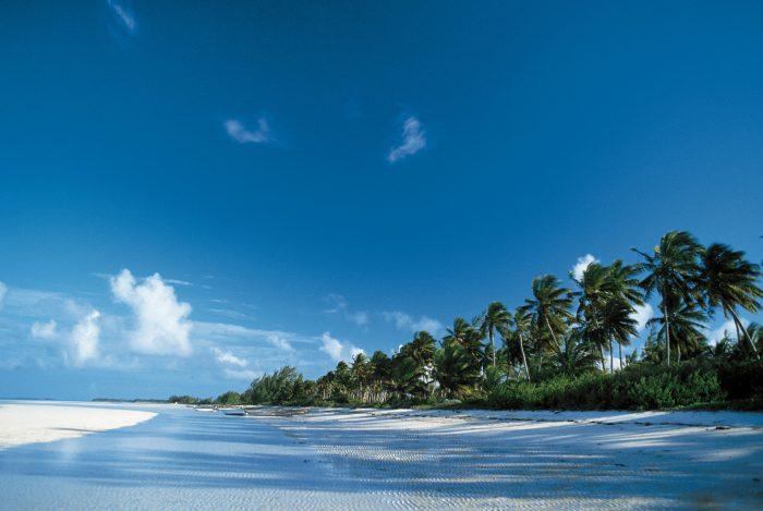 Palmbomen en wit strand bij Andros, Bahama's