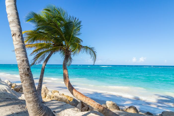 Palmbomen en wit zand bij Punta Cana