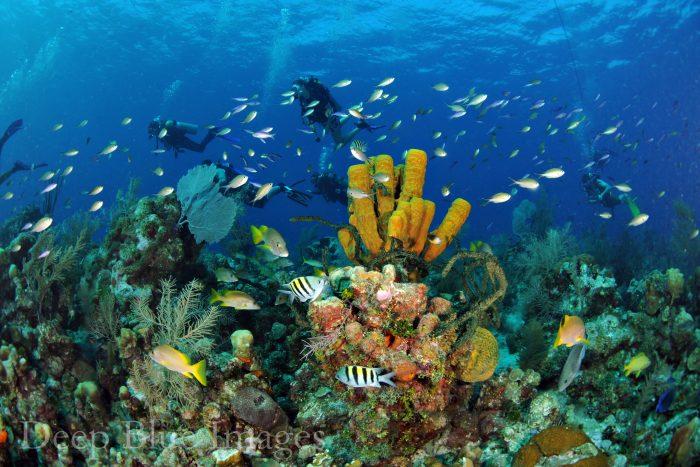 Scuba duiken bij de Bloody Bay Marine Reserve