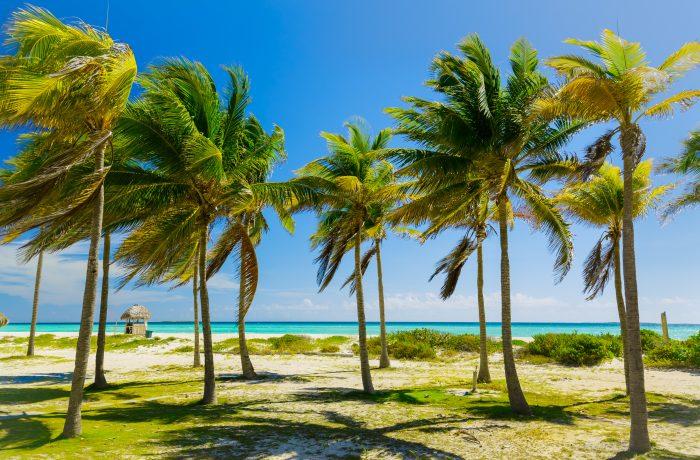 Tropische palmbomen bij Cayo Coco