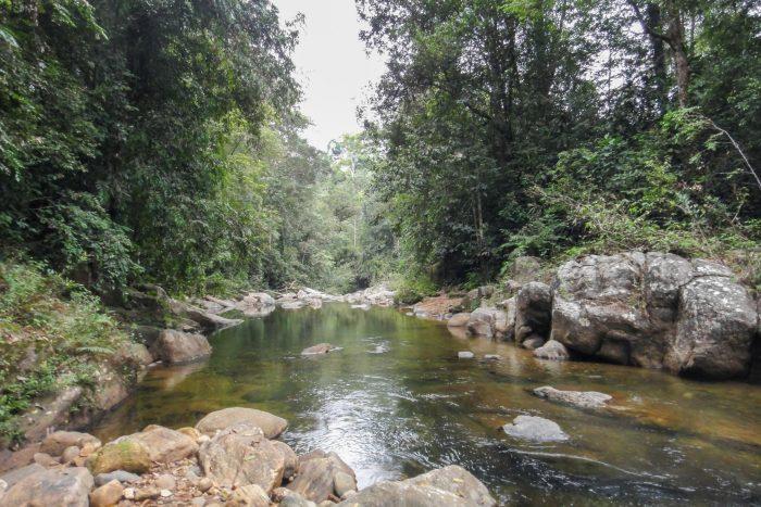 Backpacken Sri Lanka - Sinharaja Regenwoud