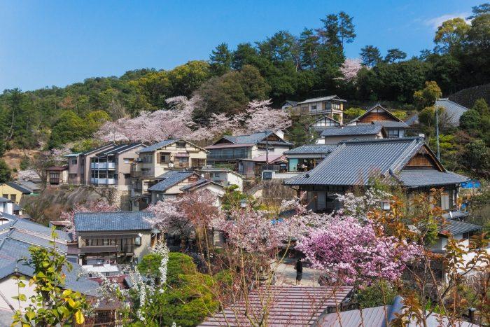 Kersenbloesems op Miyajima