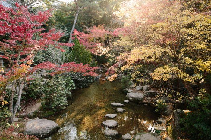 Natuur op Miyajima