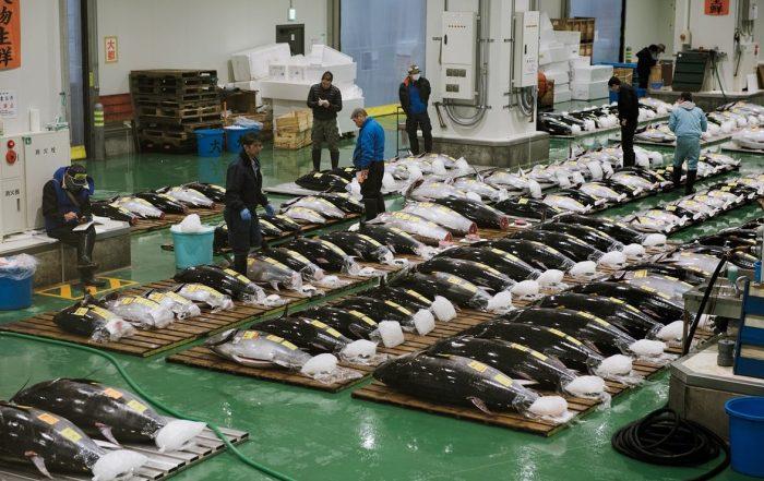 De tonijnveiling bij de Toyosu Vismarkt