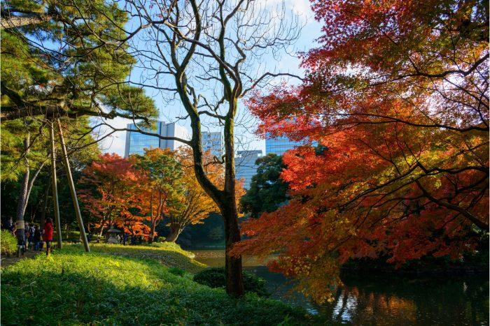 Herfstkleuren in de Koishikawa Korakuen Tuin