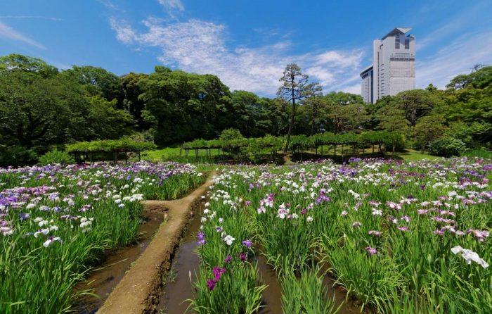 Inada (Rijstveld) in Koishikawa Korakuen