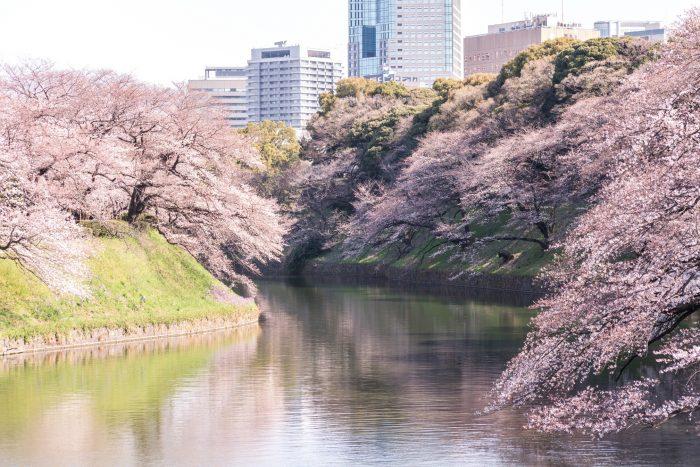 Kitanomaru Park Kersenbloesem