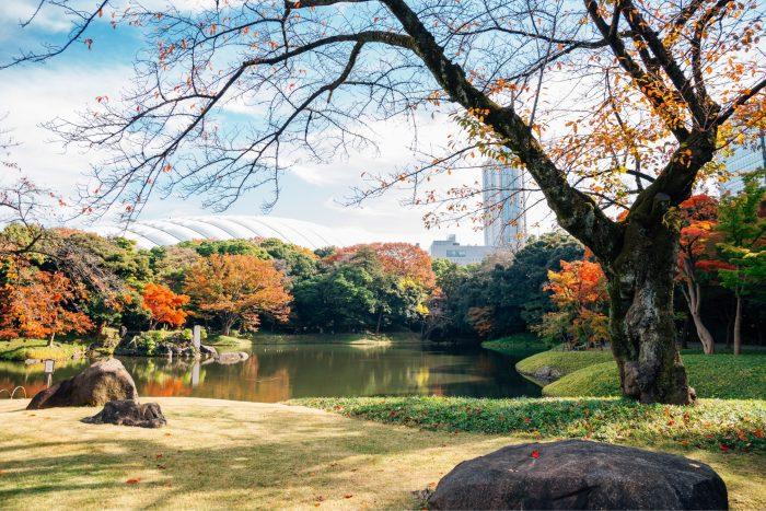 Koishikawa Korakuen Tuin in de herfst