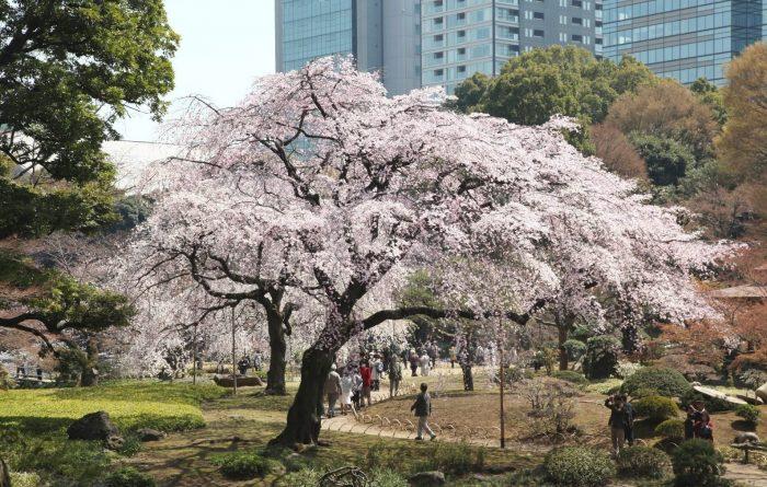 Plum Blossom Festival (lente)