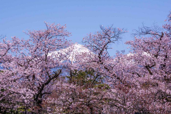 Kersenbloesem in Matsumoto Alps park