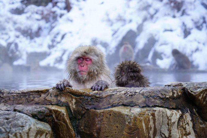 Sneeuwapen in een onsen op reisroute Nagano