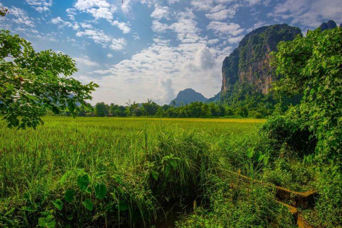 De rijstvelden bij de grotten in Vang Vieng