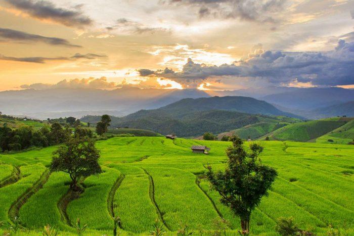 De rijstvelden van Chiang Mai