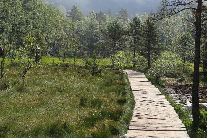 De weg van houten planken door het land naar Preikestolen