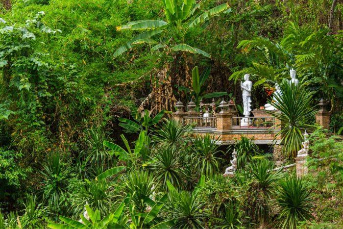 Jungle van Chiang Mai