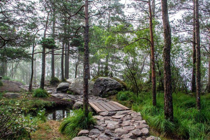 Stenen pad door het bos naar Preikestolen