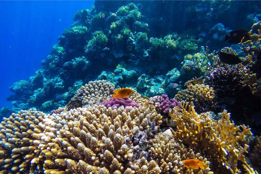 Duiken bij de Rode Zee in Egypte