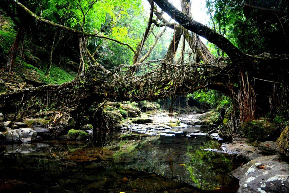 Levende wortelbruggen van Meghalaya