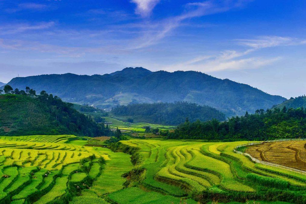 Rijstterrassen en rijstvelden van Vietnam