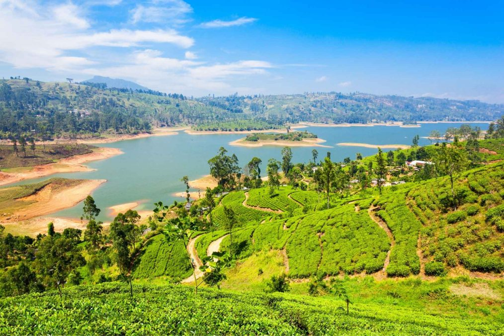 Theevelden met uitzicht op het water in Sri Lanka