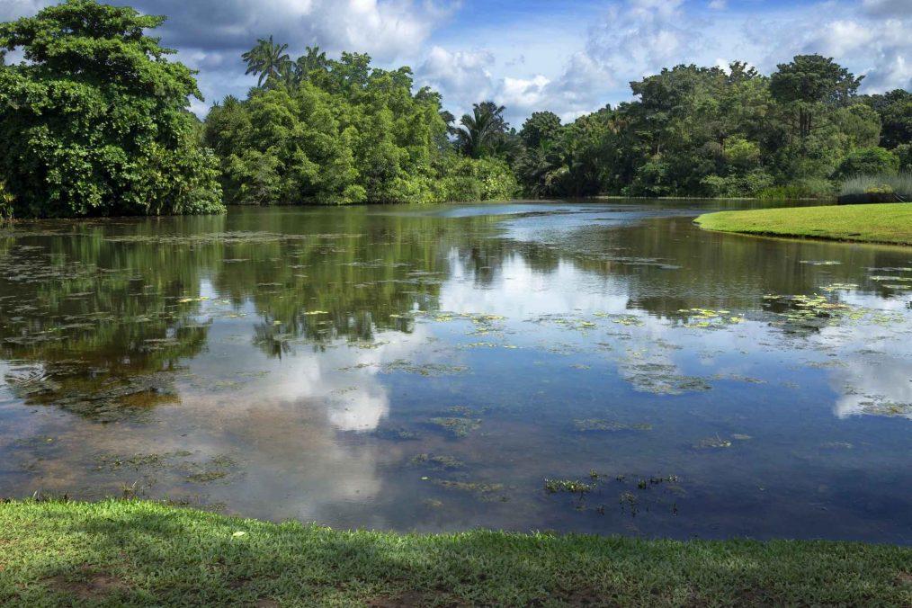 Vijver in Singapore's botanische tuinen