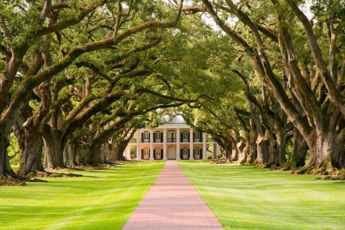 Oak Valley plantage