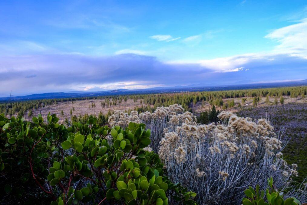 De vlakten bij Bend in Oregon