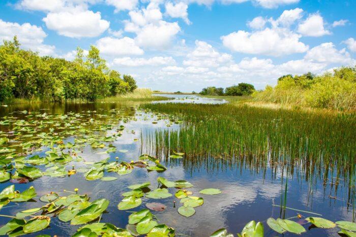 Met de boot door Everglades National Park