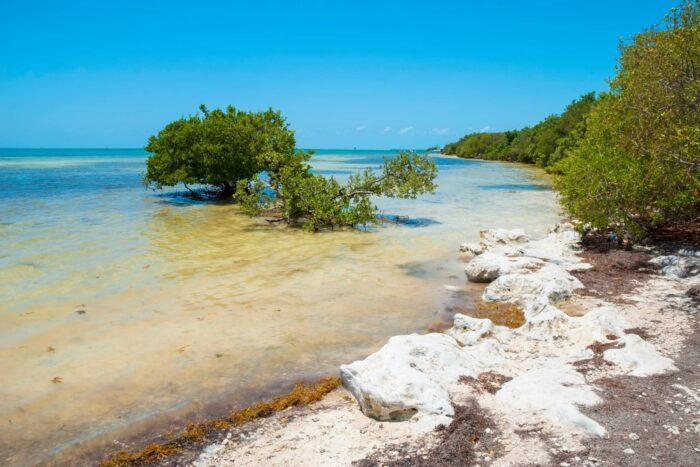 Natuur bij de Florida Keys