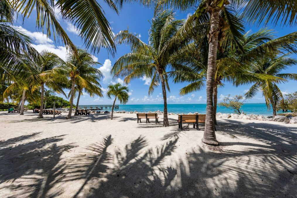 Palmbomen op het strand in de Florida Keys