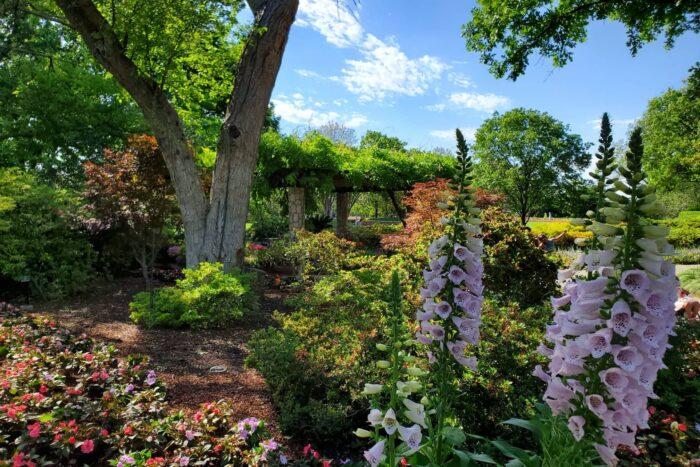 Botanische tuin en Arboretum in Dallas