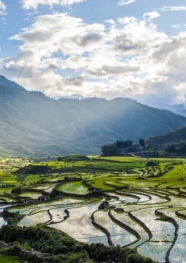 Rijstvelden in Vietnam